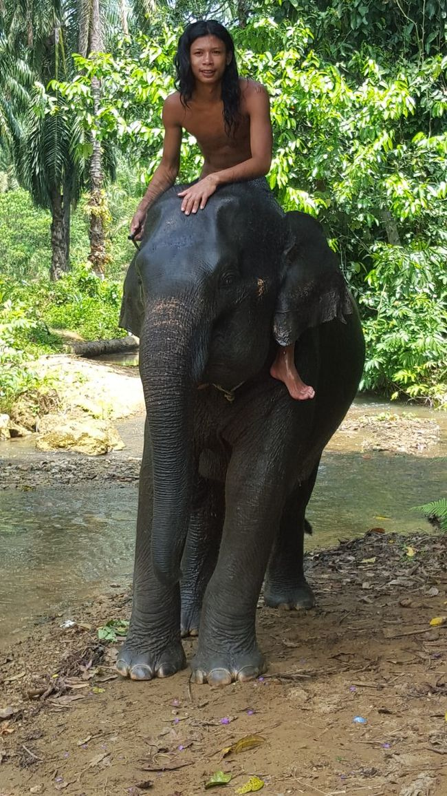Feel The Journey Adventure Travel Krabi Thailand Travel Photography Countryside Animals Elephant Elephant Trekking Jungle Young Man Nature Exotic Thailand
