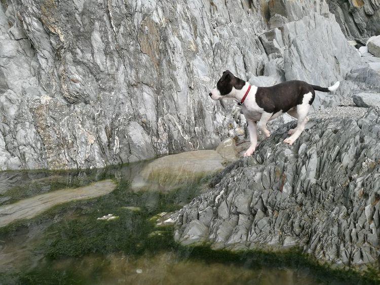 Roxy sea gazing staffy Staffordshire Bull Terrier EyeEmNewHere Water Bullterrier Puppy