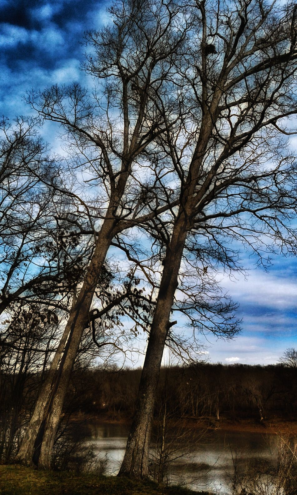Stand Tall Brush The Sky Strength Of Tree EyeEm Nature Lover No People TreePorn Sky Art Inner Reflection Meramec River