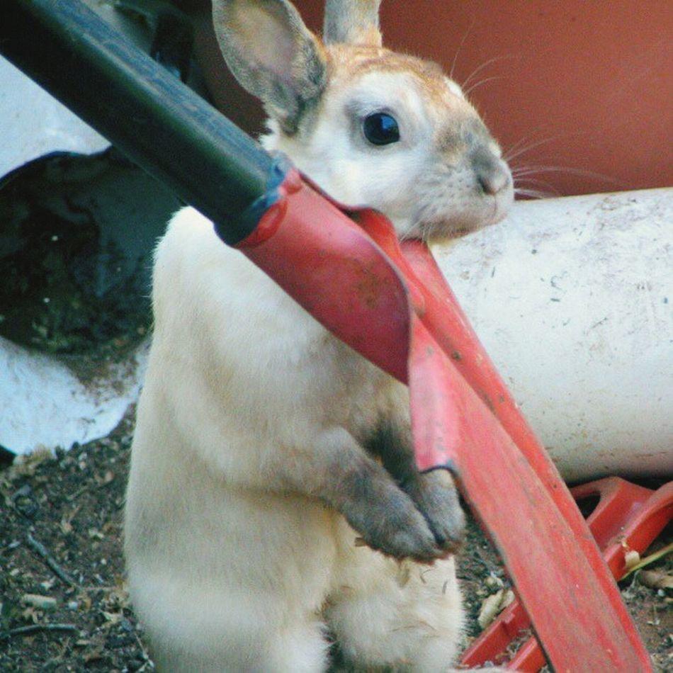 Rabbit Rabbits Playing With The Animals Mr Rabbit