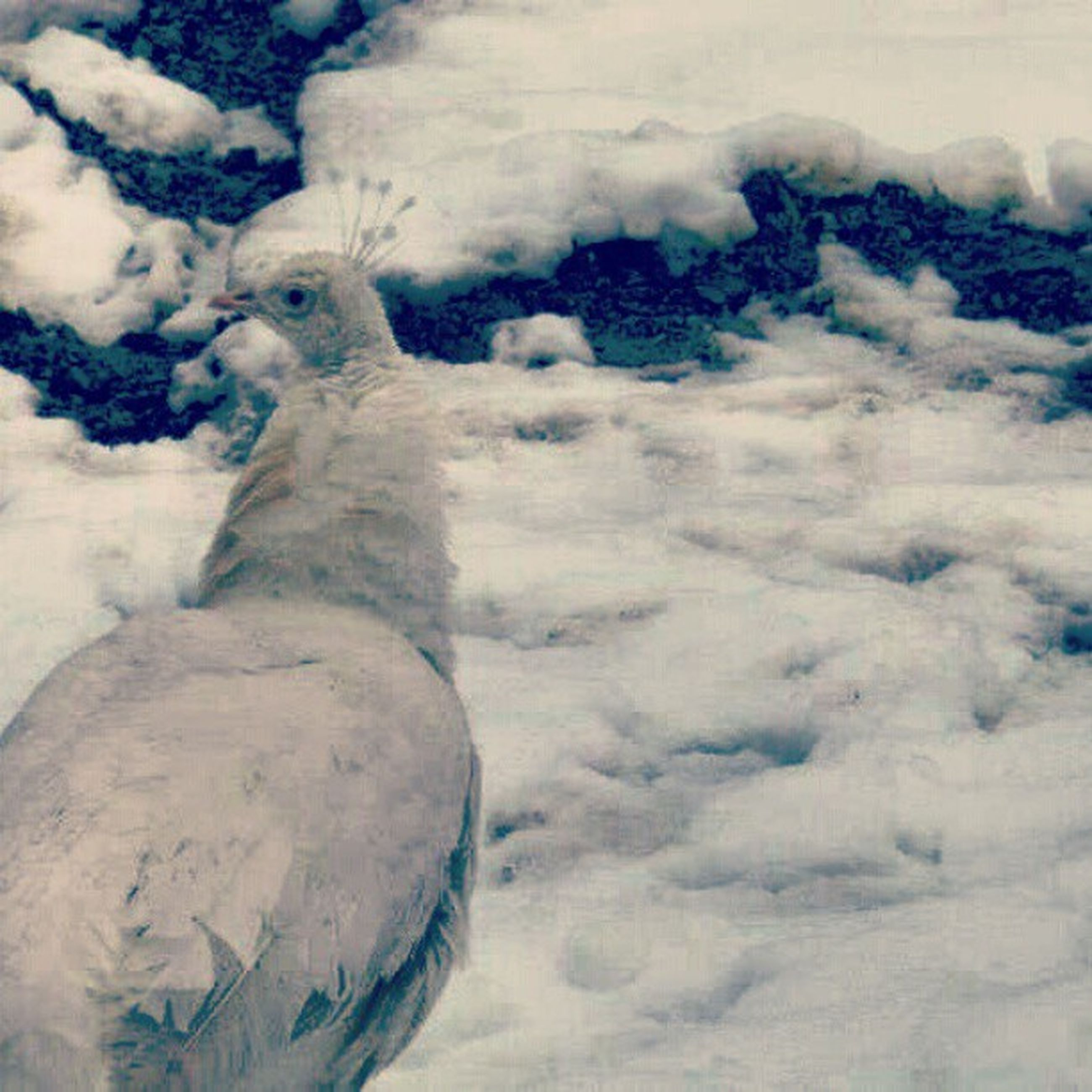 winter, snow, cold temperature, weather, white color, covering, frozen, animal themes, season, nature, covered, high angle view, no people, day, outdoors, field, animal representation, close-up, one animal, art and craft