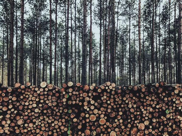 Large Group Of Objects Woodpile Forest Forestry Industry Tree EyeEm Gallery EyeEm Best Shots EyeEm Landscape_Collection The Week On Eyem The Week Of Eyeem EyeEm Team IPhone 7 Plus Eye4photography  Eyeem Market Wood Wood - Material Tree EyeEm Best Edits VSCO Vscocam EyeEmbestshots Trees Tree_collection  Wooden Fresh On Market 2016