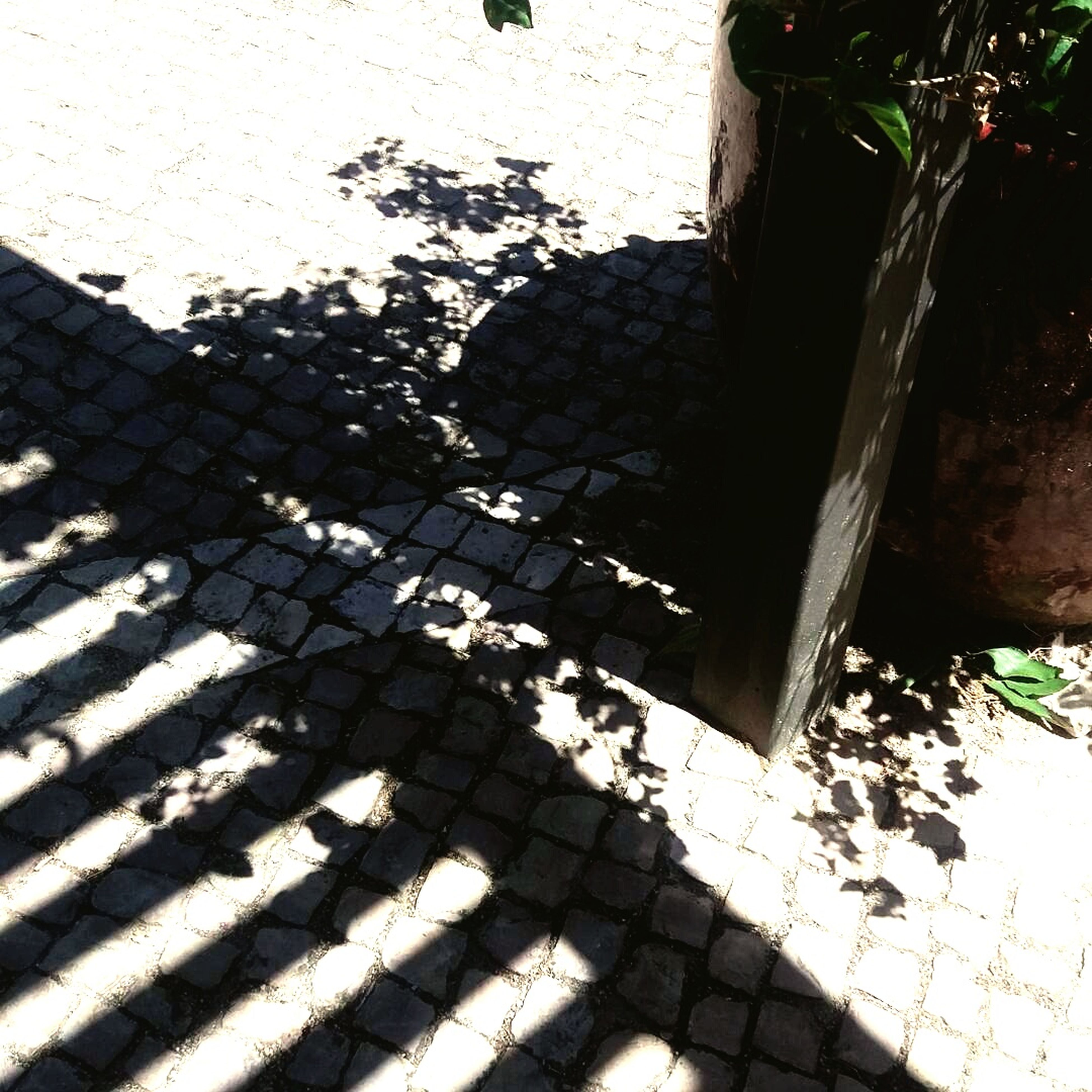 shadow, sunlight, high angle view, day, outdoors, no people, tree, close-up