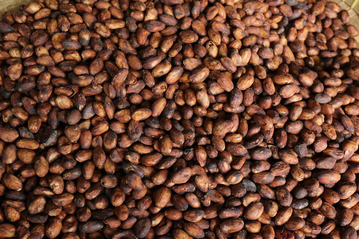 Indonesia Cacao Been Beauty And Health Cacao Cacao Beans Cacao Nibs Colesterol Food And Drink Fresh Full Frame Full Frame Shot Harvest Indonesian Cacao Jember Nature No People Outdoors Vitamin
