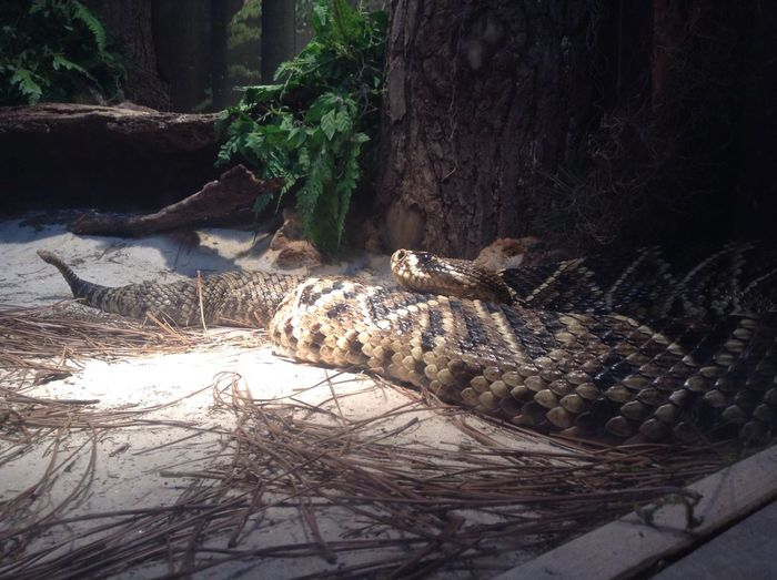 Snake Capture Animals @ Nashville Zoo Nature Snake