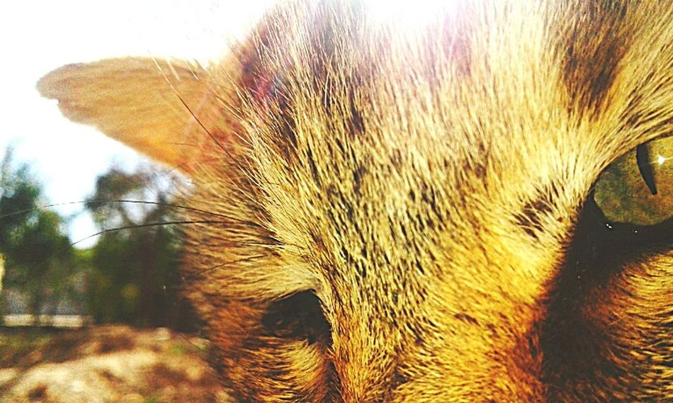 EyeEmNewHere EyeEm Best Shots Animal Photography Greeneyes :) Wildlife Cat Lovers