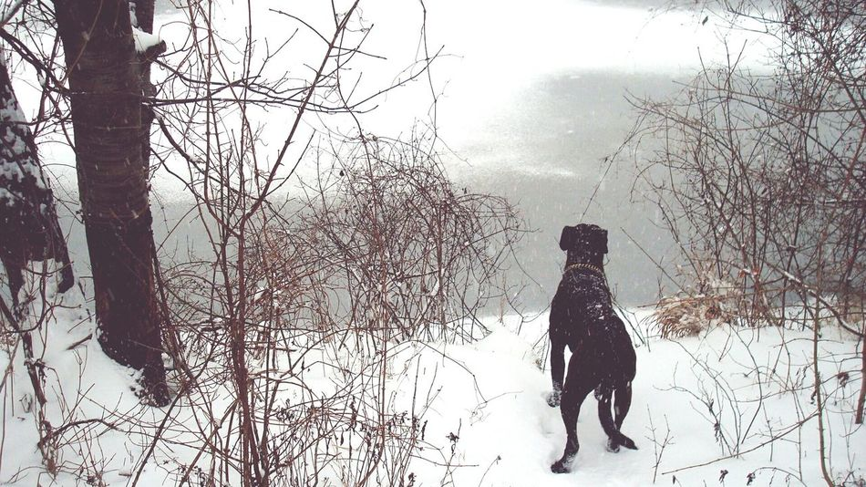 Winter It's Cold Outside Boxer Dog Boxer Snow Nature Lover Freezing Water Iced Lookingout Have A Look Ice On The Water Shore Pastel Power My Favorite Photo
