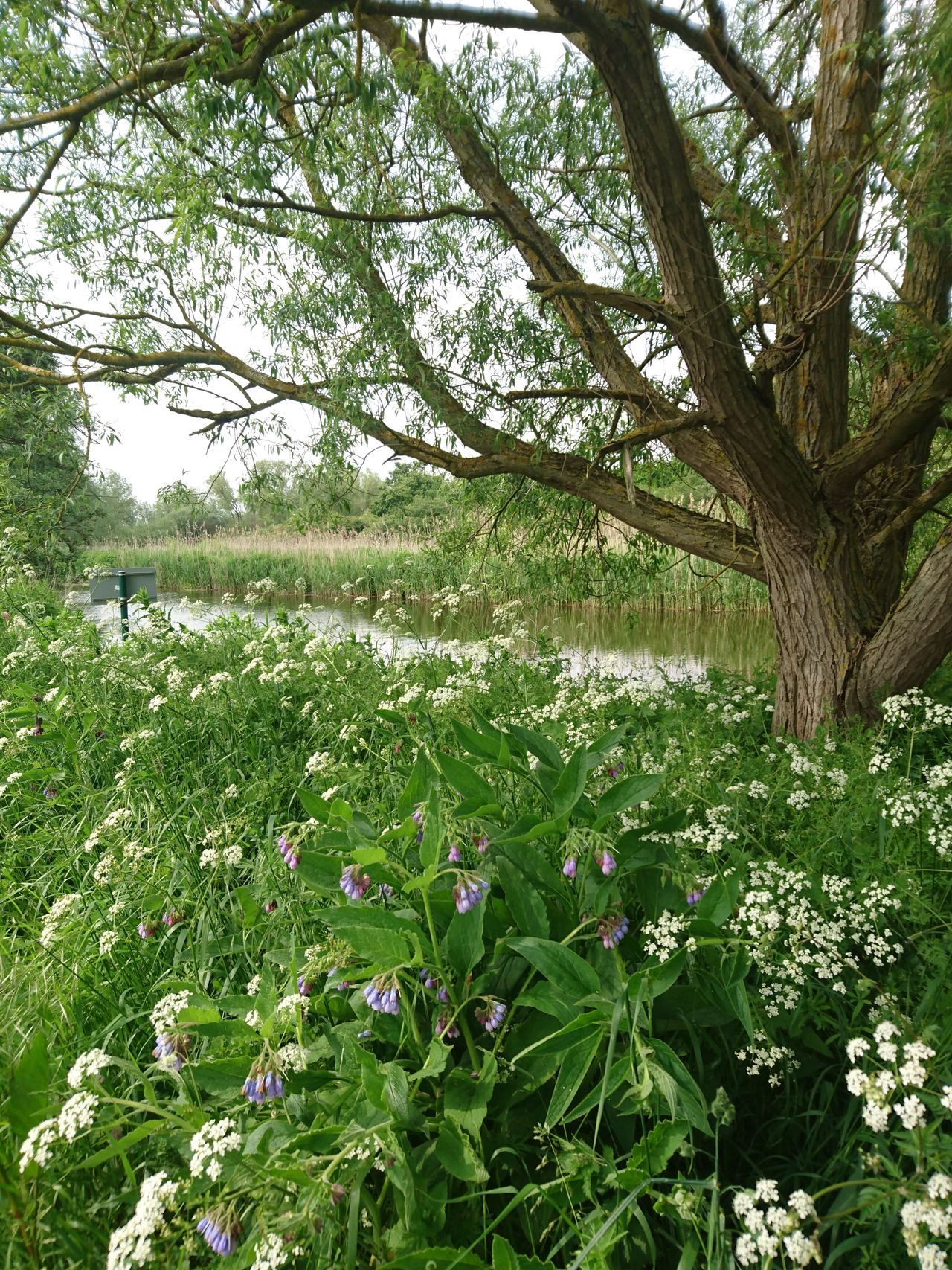 Beauty In Nature Blooming Blossom Constablecountry Day Essex Field Flatford Mill Flower Fragility Freshness Grass Green Color Growth Nature No People Outdoors Plant River River Stour Stour Suffolk Tranquil Scene Tranquility Tree