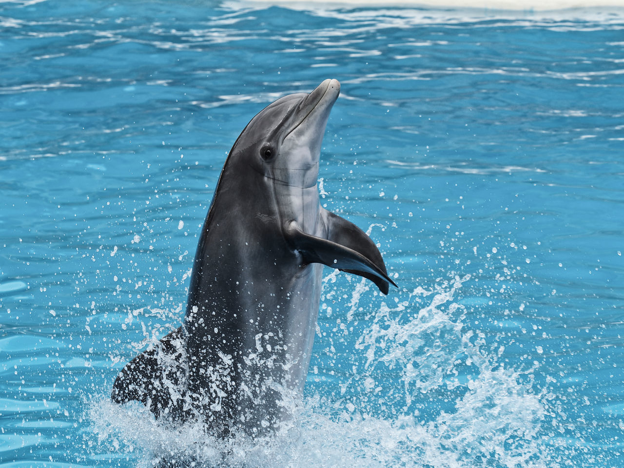 Animal Themes Animal Wildlife Animals In The Wild Aquatic Mammal Beauty In Nature Day Dolphin Loro Parque Mammal Nature No People Outdoors Sea Sea Life Swimming Teneriffa Water Waterfront Whale