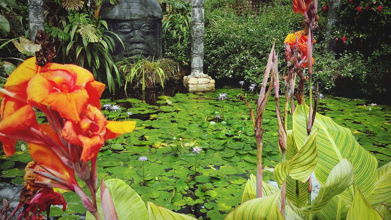 Butterfly Farm Stratford Stratford Upon Avon Stratfordbutterflyfarm Pond Water Flowers Tropical Colourful Orange Water Lilies Columns