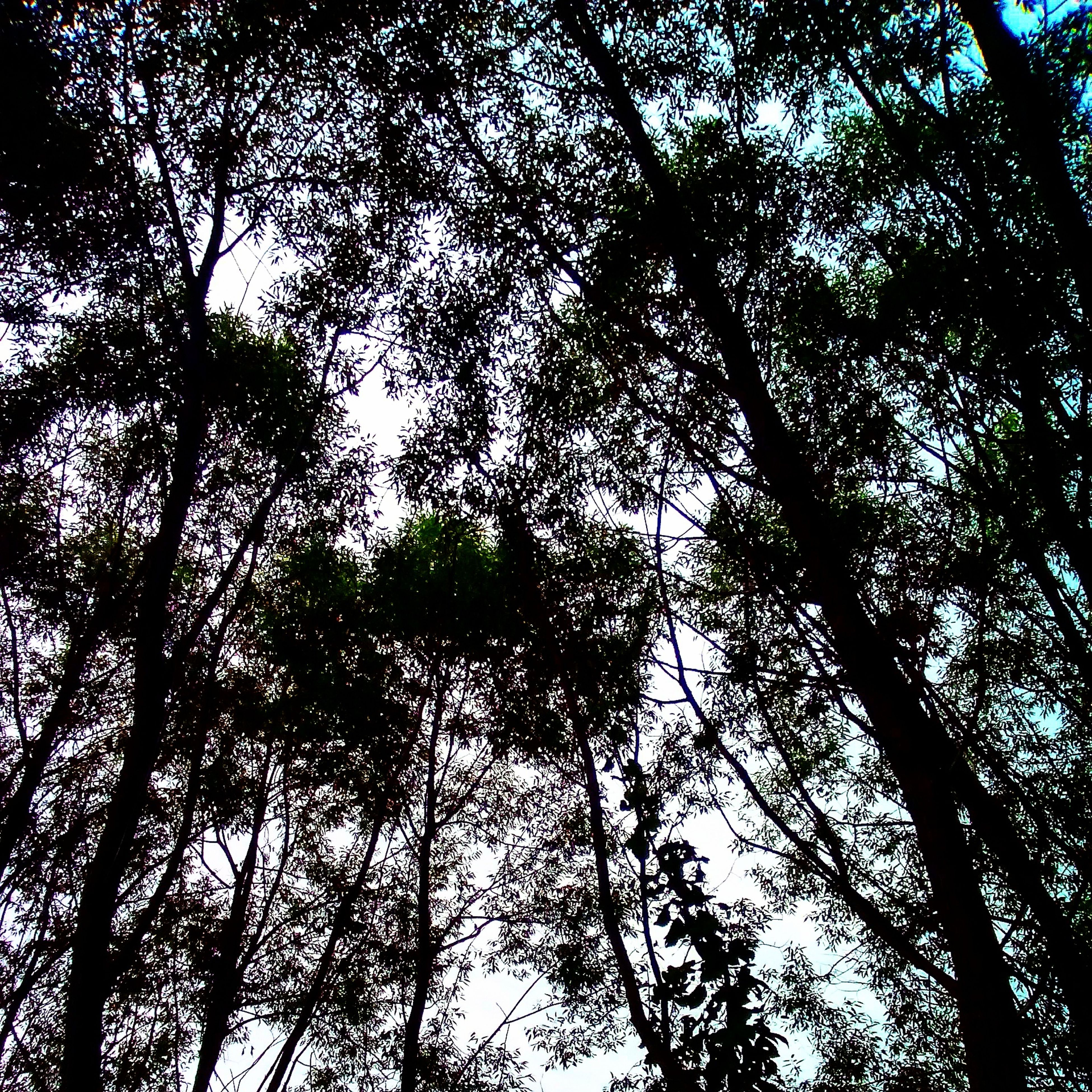 tree, low angle view, branch, growth, tranquility, nature, beauty in nature, forest, scenics, tranquil scene, tree trunk, sky, outdoors, no people, day, backgrounds, woodland, idyllic, non-urban scene, full frame, green color, lush foliage
