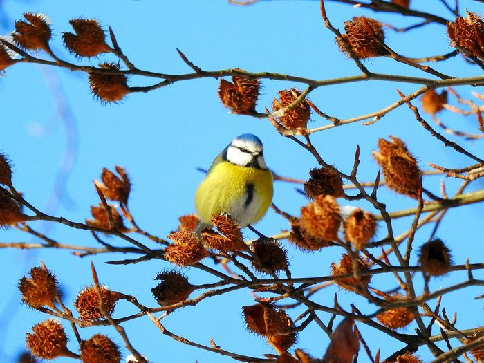 Animal Wildlife Tree Branch One Animal Bird Animals In The Wild No People Animal Themes Perching Sky Winter Outdoors Day Nature Tomtit Paint The Town Yellow