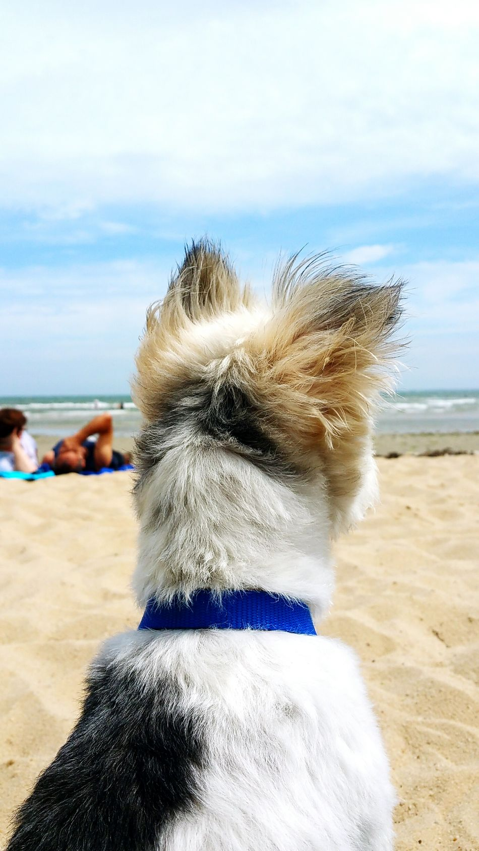 So this is the beach ... sun bathing timeBeach Day For The First Time Happy Puppy