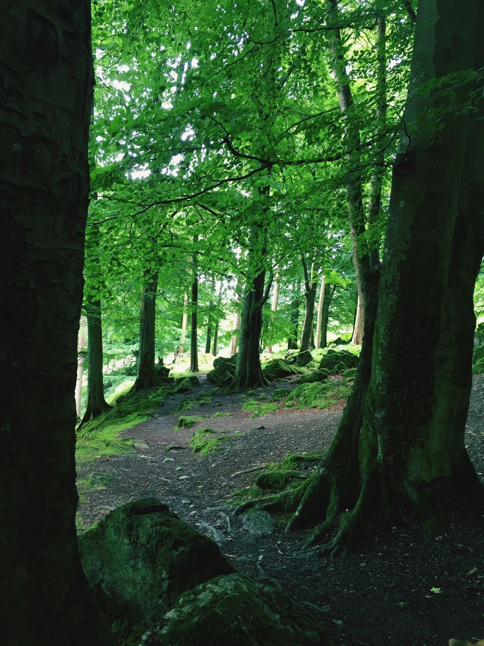 nature, tree, forest, tranquility, beauty in nature, no people, day, growth, outdoors