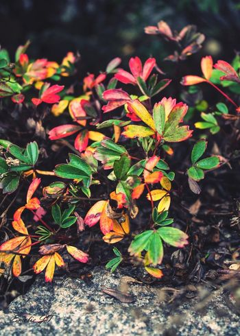 The colours of the leaf Nature Sweden EyeEm Nature Lover Eyem Nature Lovers