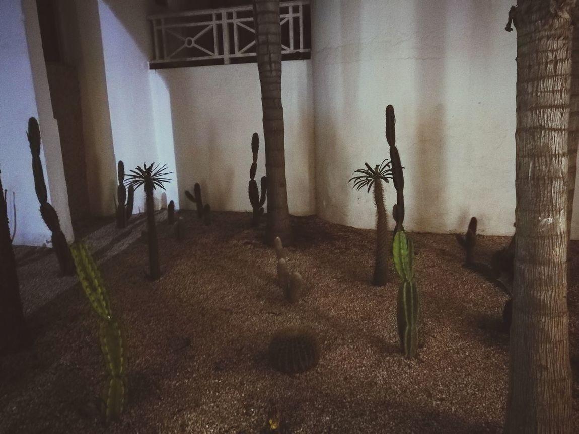 Cactus Nature No People Beauty In Nature Tranquility Tranquil Scene Dans La Vue De L'objectif !!! Dans Le Regard Silhouette Arts Culture And Entertainment
