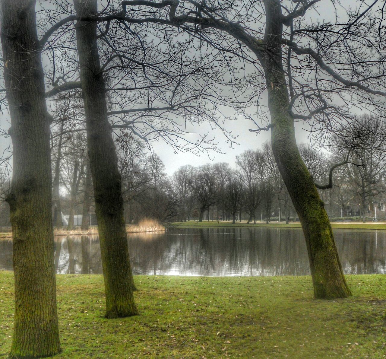 Large Pond In Park