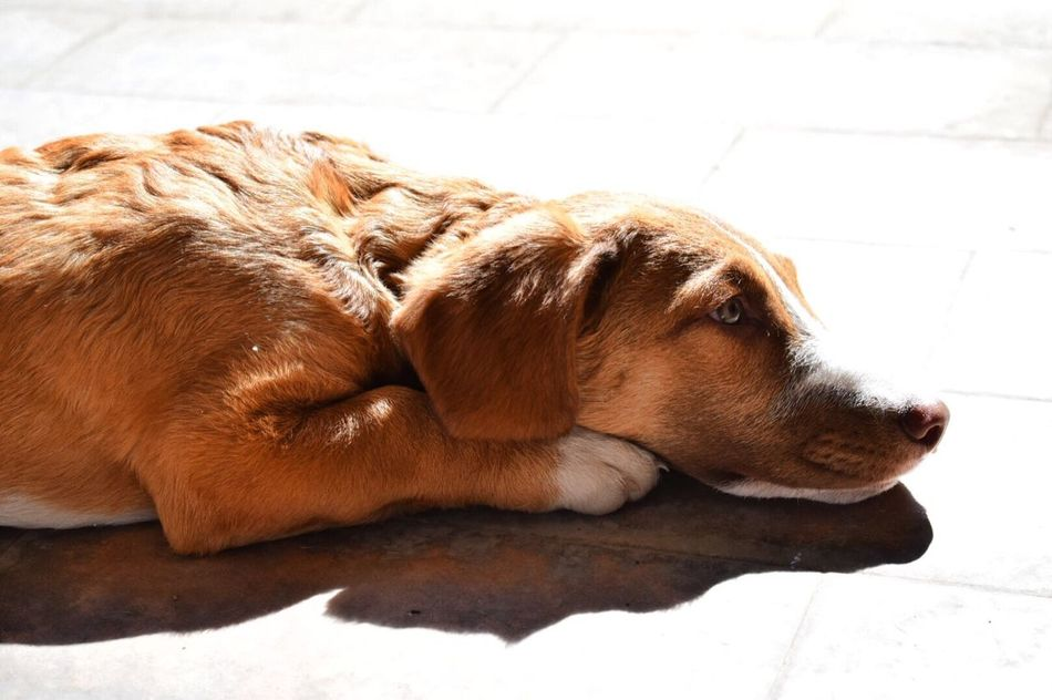 Animal Themes Dog Mammal Pets Relaxation Domestic Animals No People Lying Down One Animal Close-up Day Outdoors EyeEmNewHere
