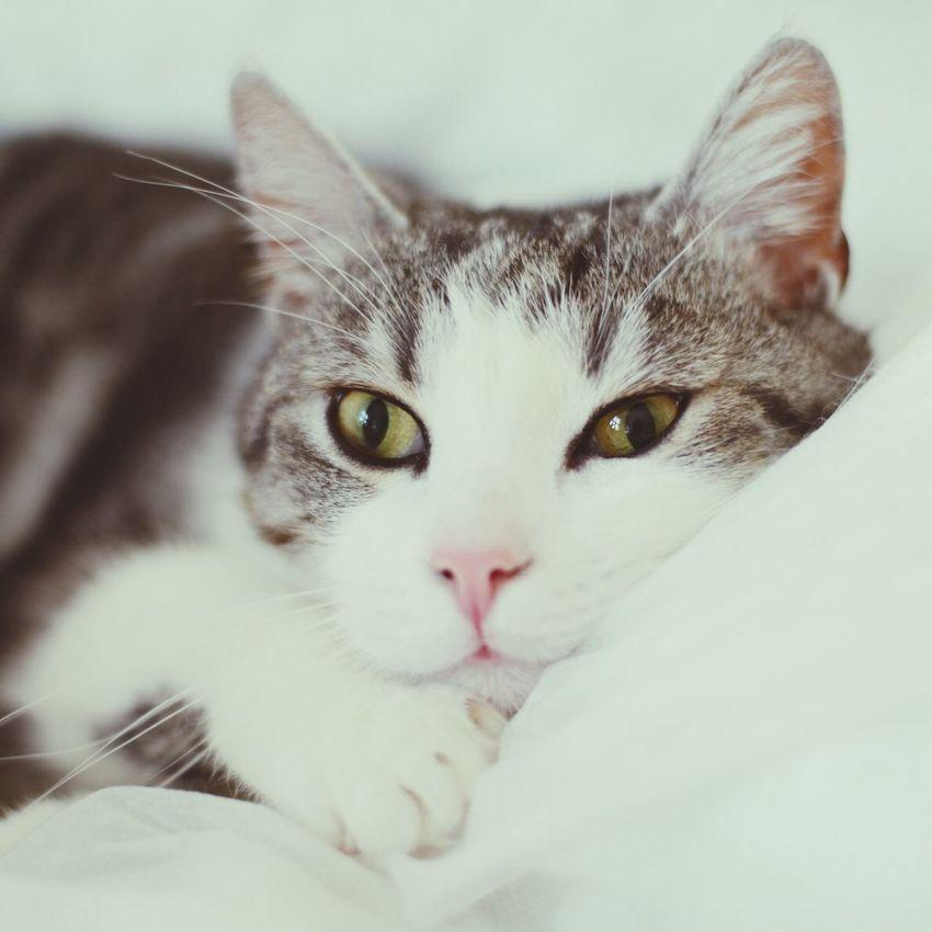 Miezekatze Cat
