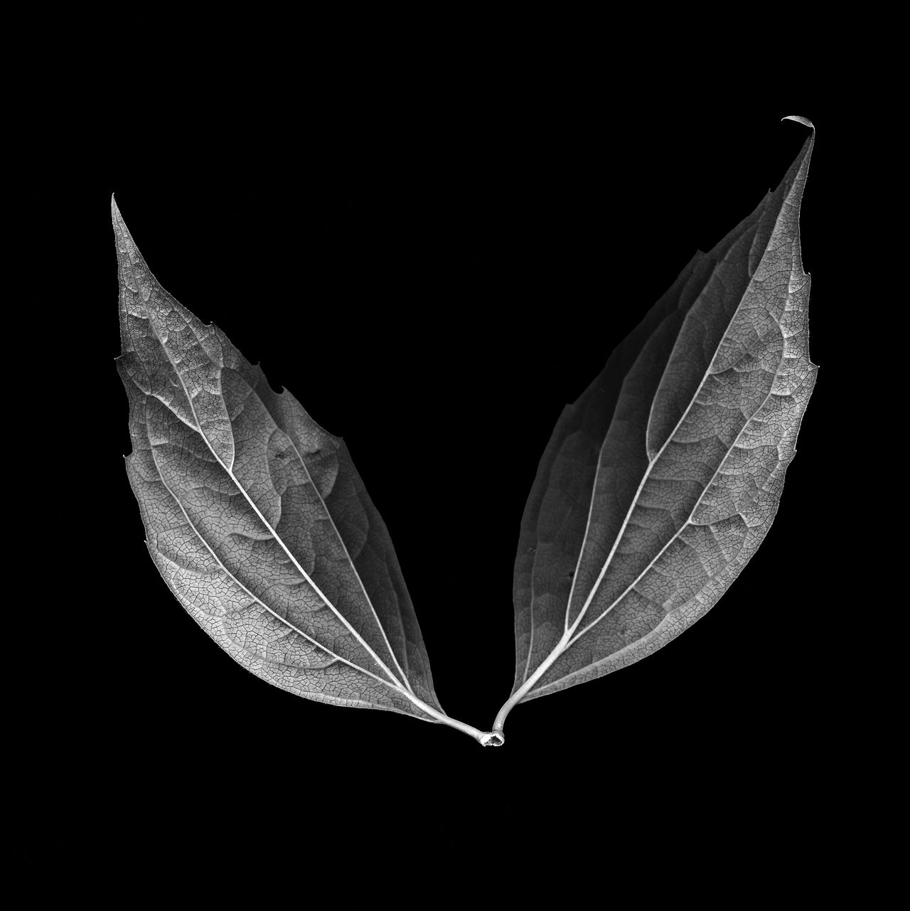 Black Black And White Black&white Blackandwhite Canoscan 9000f Leaf Scanner  White EyeEm Diversity Art Is Everywhere The Great Outdoors - 2017 EyeEm Awards BYOPaper!