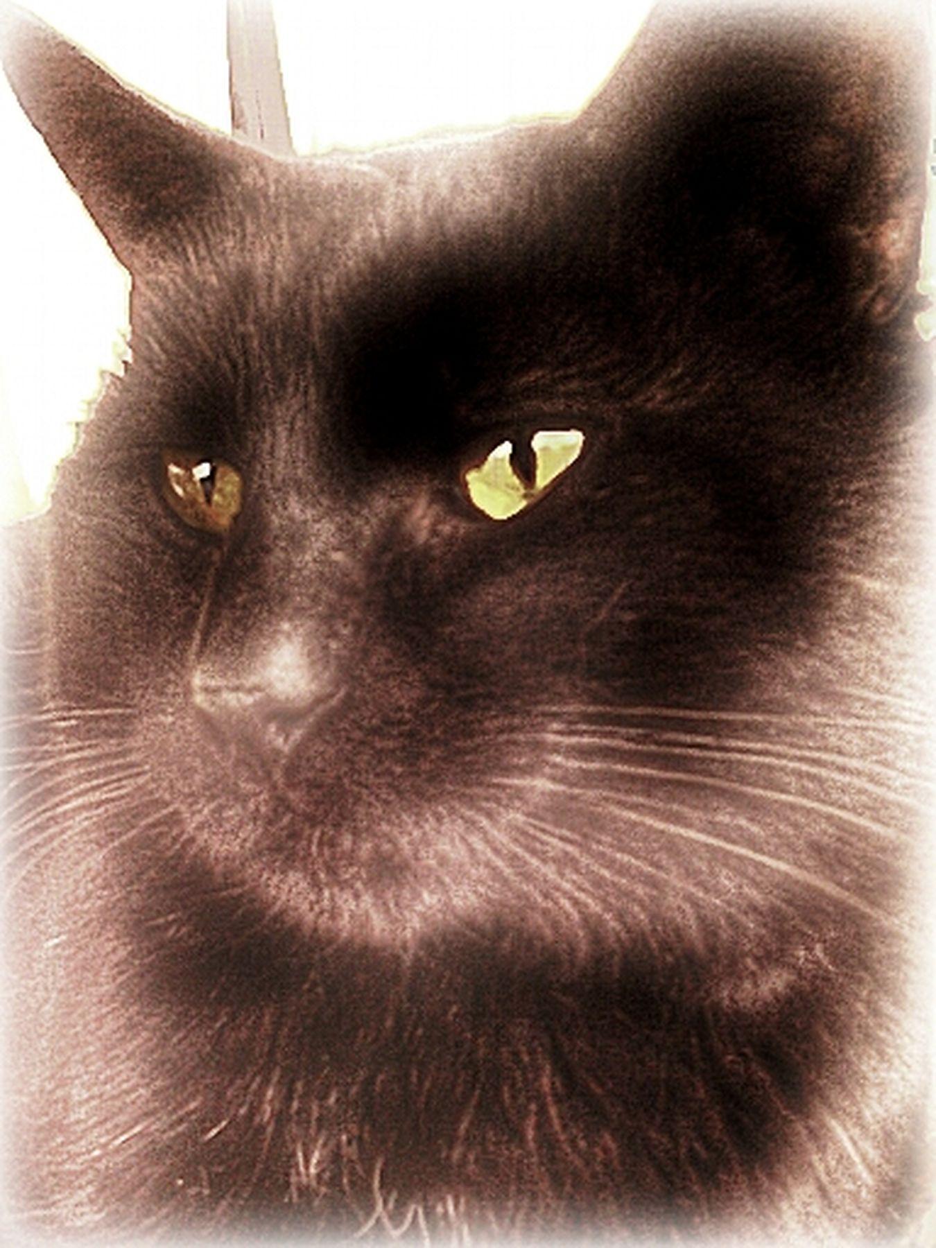 HERES ONE FOR Cat Lovers Caturday Animals EyeEm Animals Streamzoofamily TheVille Cat Lovers NEM Still Life NEM Black&white