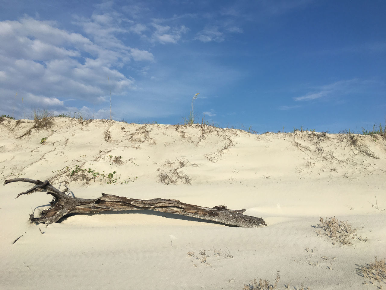 Landscape at the Beach Arid Climate Beauty In Nature Blue Cloud - Sky Day Dead Tree Landscape Nature No People Outdoors Sand Sand Dune Scenics Sky Tranquil Scene Tranquility Tree