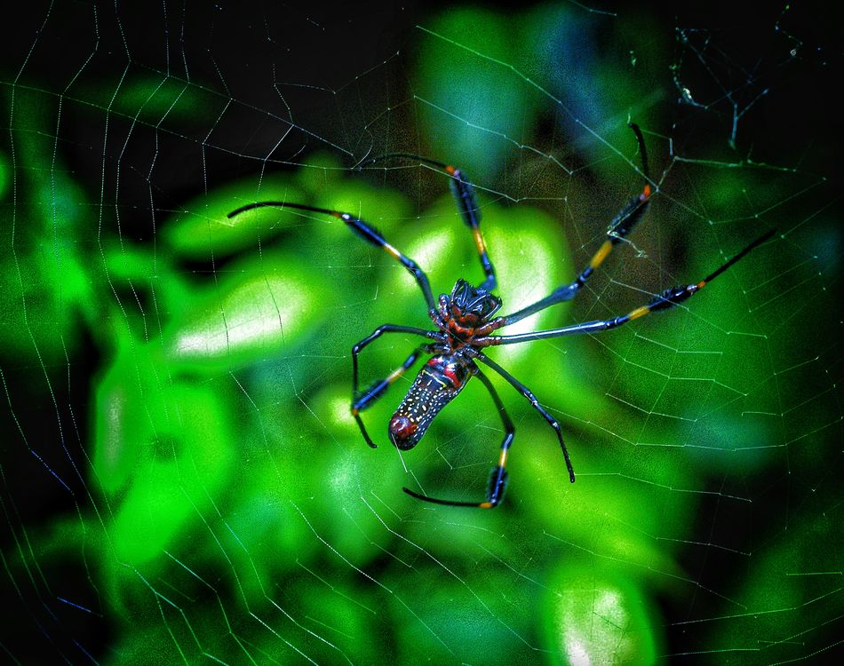 """""""Natures design"""" Electric Blue Color Focus On Foreground Insect Natural Pattern Nature No People Spider Spider Web"""