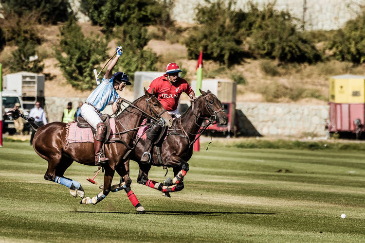 Iran's polo team against Argentine, Tehran Iran Polo Team Vs Argentine Racing Animal Themes Competition Competitive Sport Day Domestic Animals Field Grass Horse Horse Riding Horse Running Iran Mammal Outdoors Playing Field Polo Game Sport Tehran, Iran