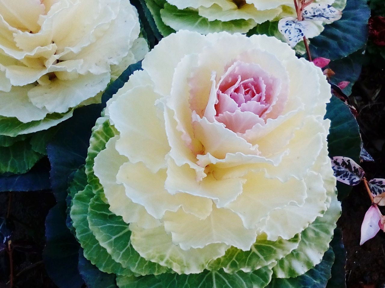 flower, freshness, petal, flower head, food and drink, no people, close-up, beauty in nature, nature, rose - flower, day, food, fragility, outdoors