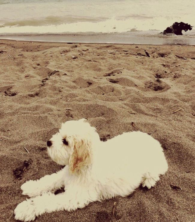 Animal Themes Dog Beach Sand Sea Day Beauty In Nature Pets First Eyeem Photo