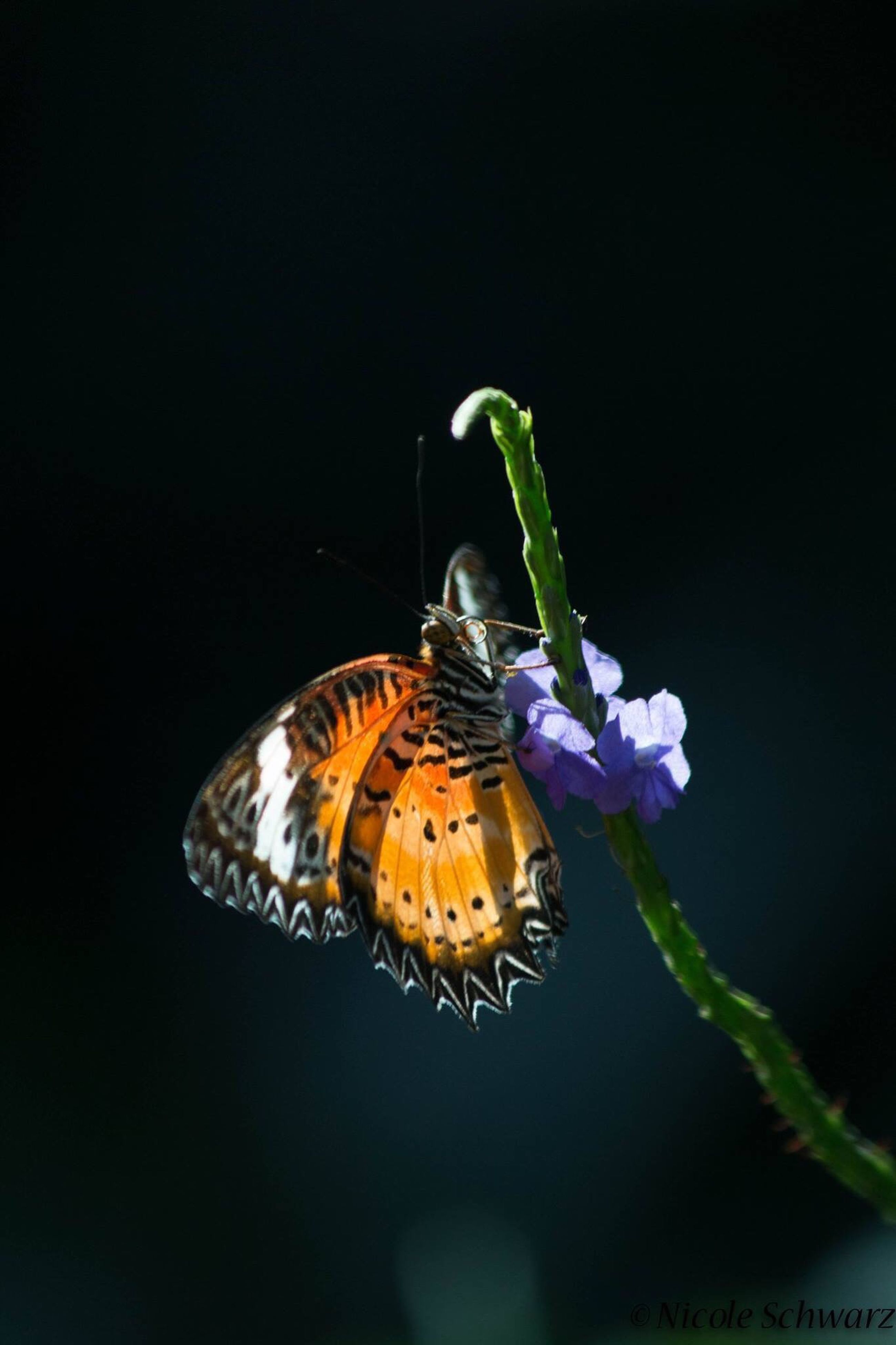 animal themes, one animal, insect, animals in the wild, wildlife, close-up, flower, butterfly, nature, fragility, butterfly - insect, beauty in nature, plant, focus on foreground, purple, growth, freshness, pollination, zoology, animal wing, animal markings, no people