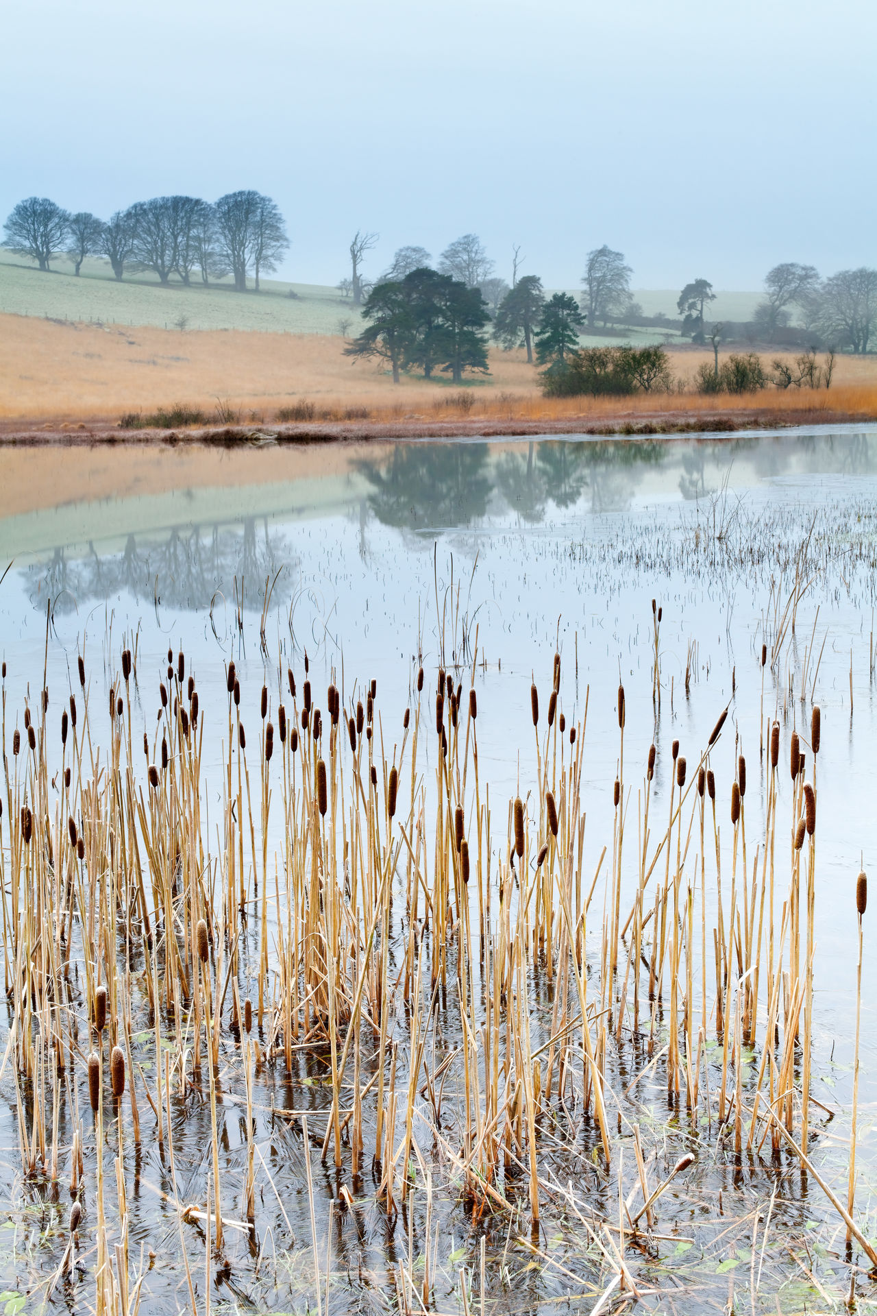 Beauty In Nature Cold Temperature Day Grass Lake Landscape Mendip Hills Mendips Nature No People Outdoors Plant Priddy Scenics Sky Somerset England Tranquil Scene Tranquility Water Winter