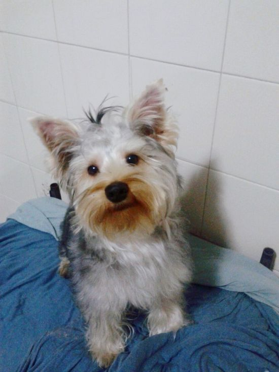 Apenas Fofura. *.* Cute♡ Cute Pets I Love My Dog Lua & Orion Sao Paulo - Brazil Hi!