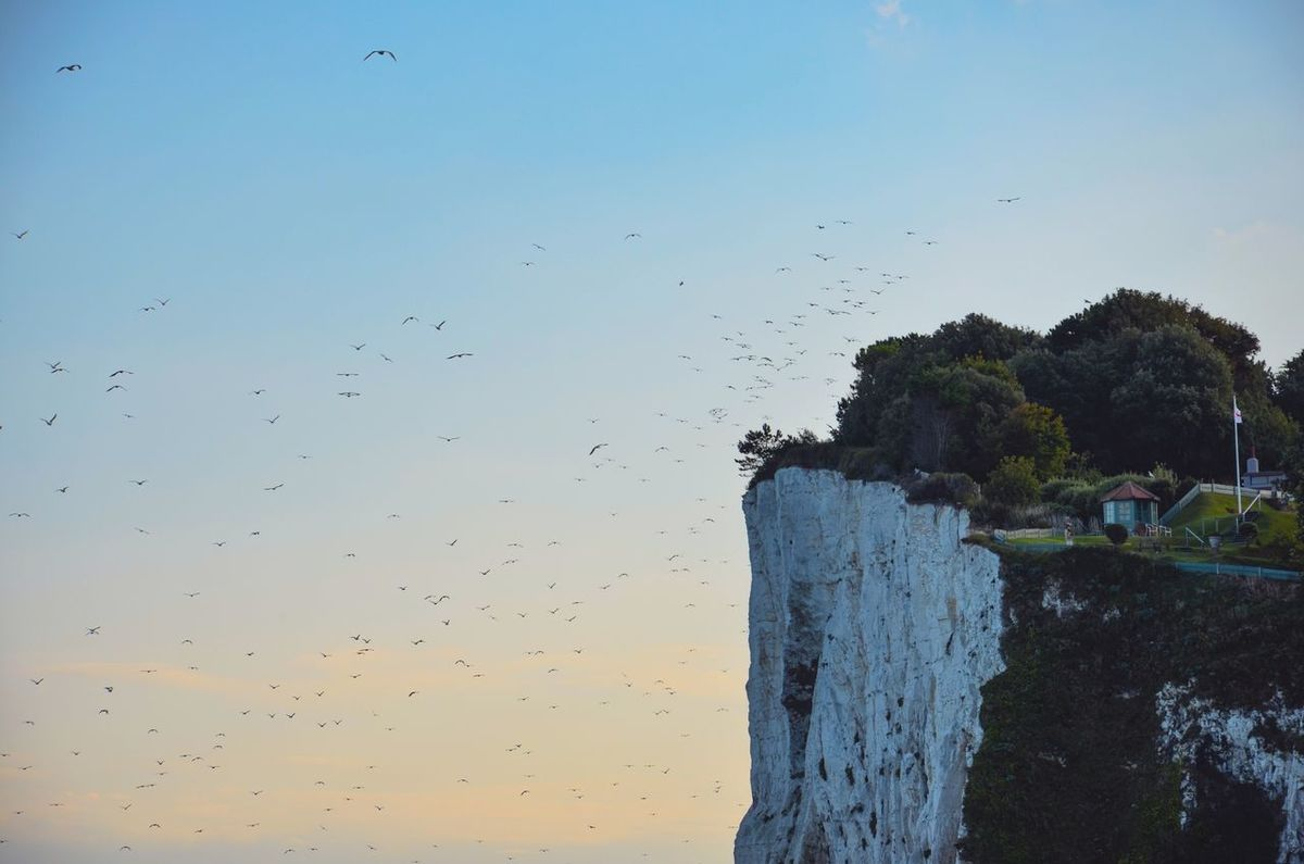 Swarm Nature Animal Themes Sky Beauty In Nature Scenics Bird Large Group Of Animals Outdoors Flock Of Birds Flying Sunset Clear Sky Cliff White Cliff White Cliffs Of Dover St Margaret's At Cliffe Kent England Lost In The Landscape