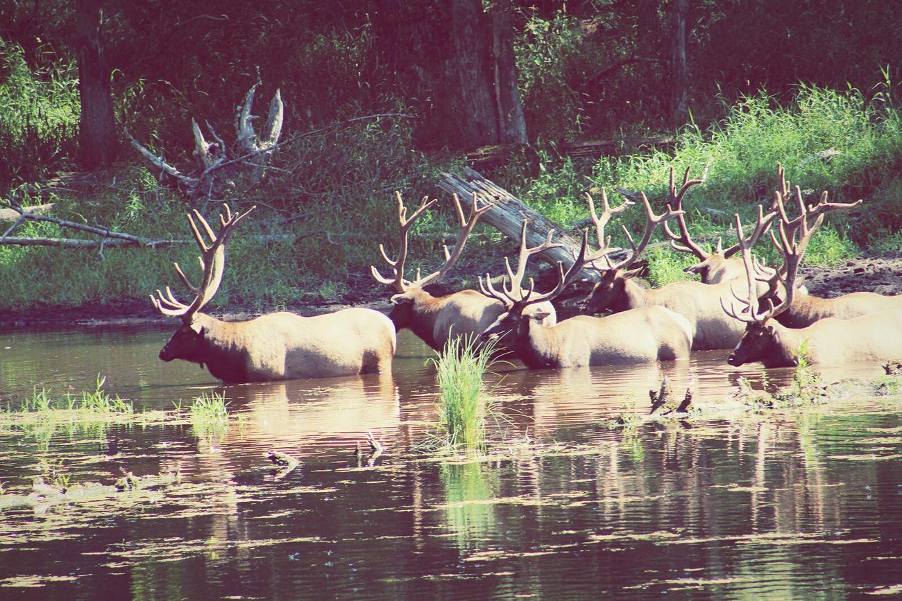 Wildlife Animals Nature