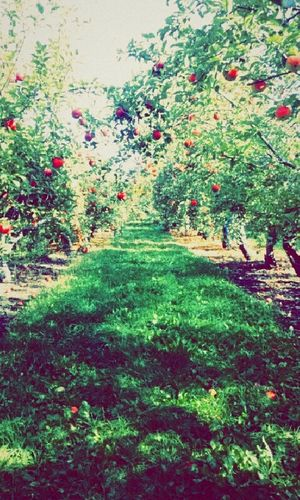 The moral of Snow White is to never eat apples 🍎🍏 First Eyeem Photo