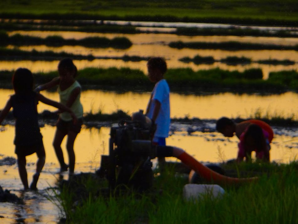 Playing in the rice fields Agriculture Children Playing Group Of People Leisure Activity Nature People Philippines ❤️ Reflection Rice Field Rural Scene Sunset Silhouettes Water
