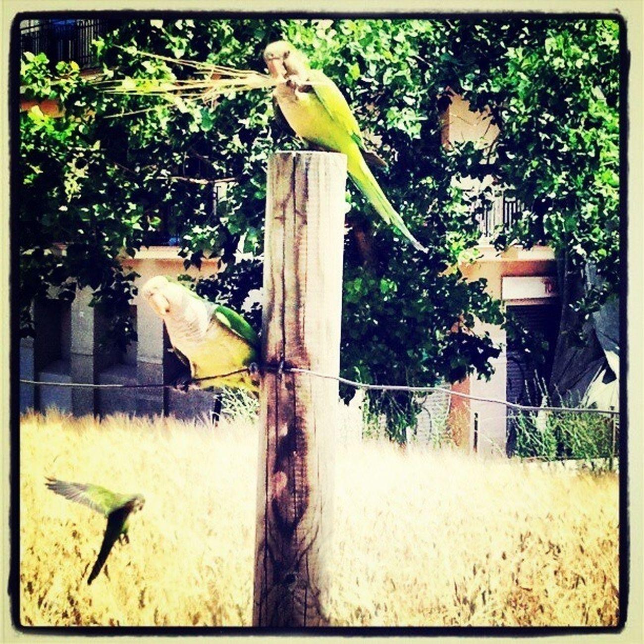 Green EyeEm Birds Cotorras En La Ciudad