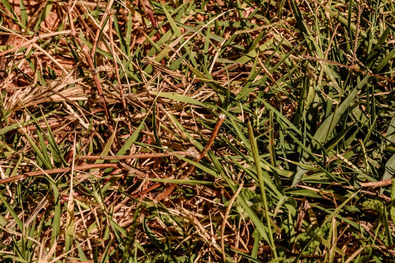 field, nature, grass, full frame, no people, outdoors, plant, backgrounds, day, growth, close-up