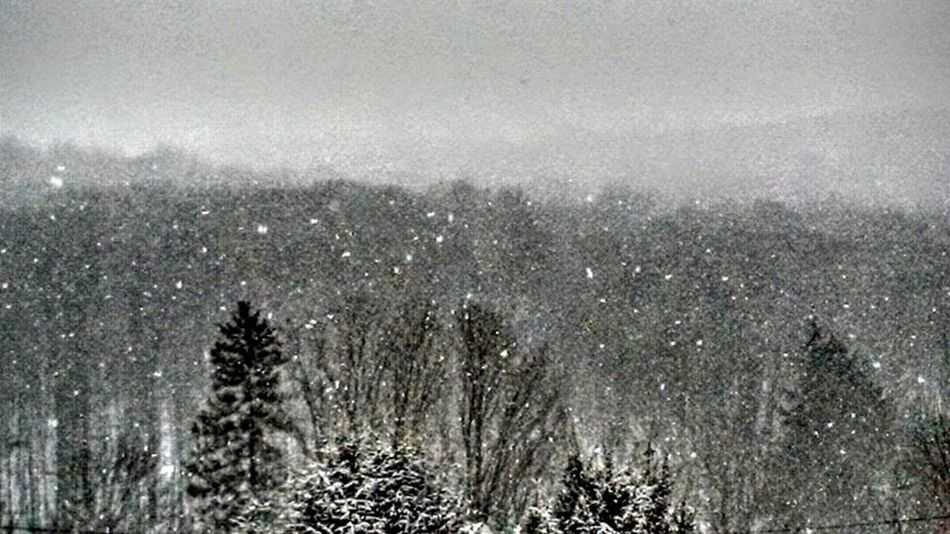 Atmospheric Mood Catskill Mountain Forest Forest With Snow Falling Mountain Mountain Forest Mountain Forest With Snow Moutains Snowfall Nature Pine Hill, N.Y. Snow Fall Snow Falling Treetops