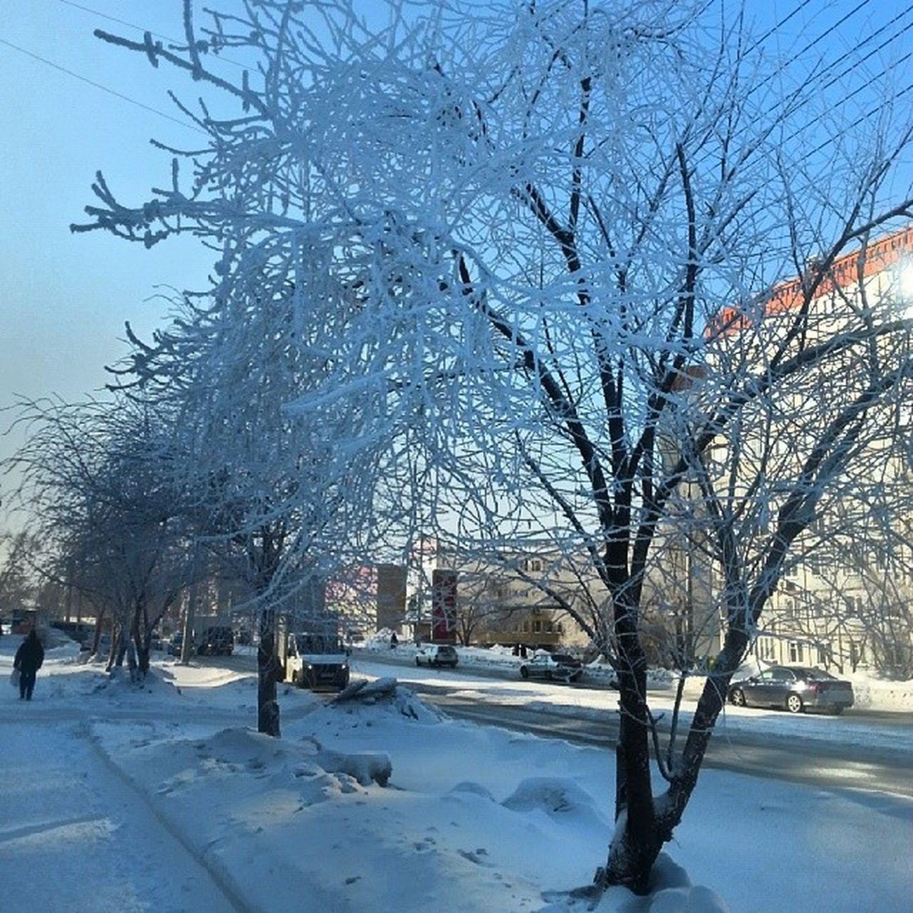 2014 -02, Новосибирск . деревья в мороз -36/ Novosibirsk. Tree in minus36.
