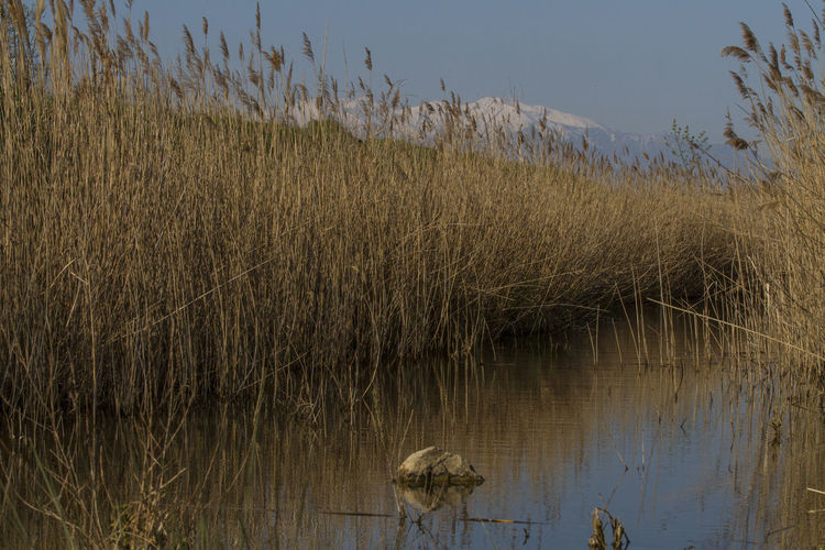 Beauty In Nature Canigou Mountain Day France Growth Lake Landscape Mountain Snow & Sky Nature No People Outdoors Reed - Grass Family Réart Saint Nazaire En Roussillon Sky Tranquility Tree Water
