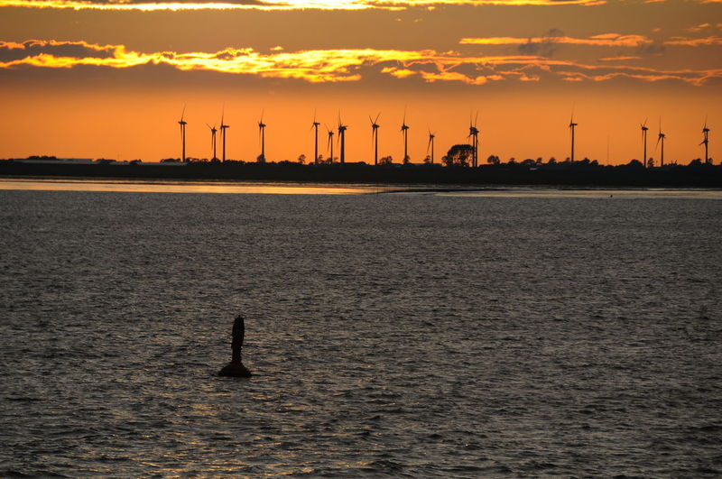 sunset at Elbe river Animal Themes Animals In The Wild Beauty In Nature Clean Energy Elbe Elbe Windpark Nature No People Outdoors Sailboat Sea Silhouette Sky Sunset Water Wind Energy