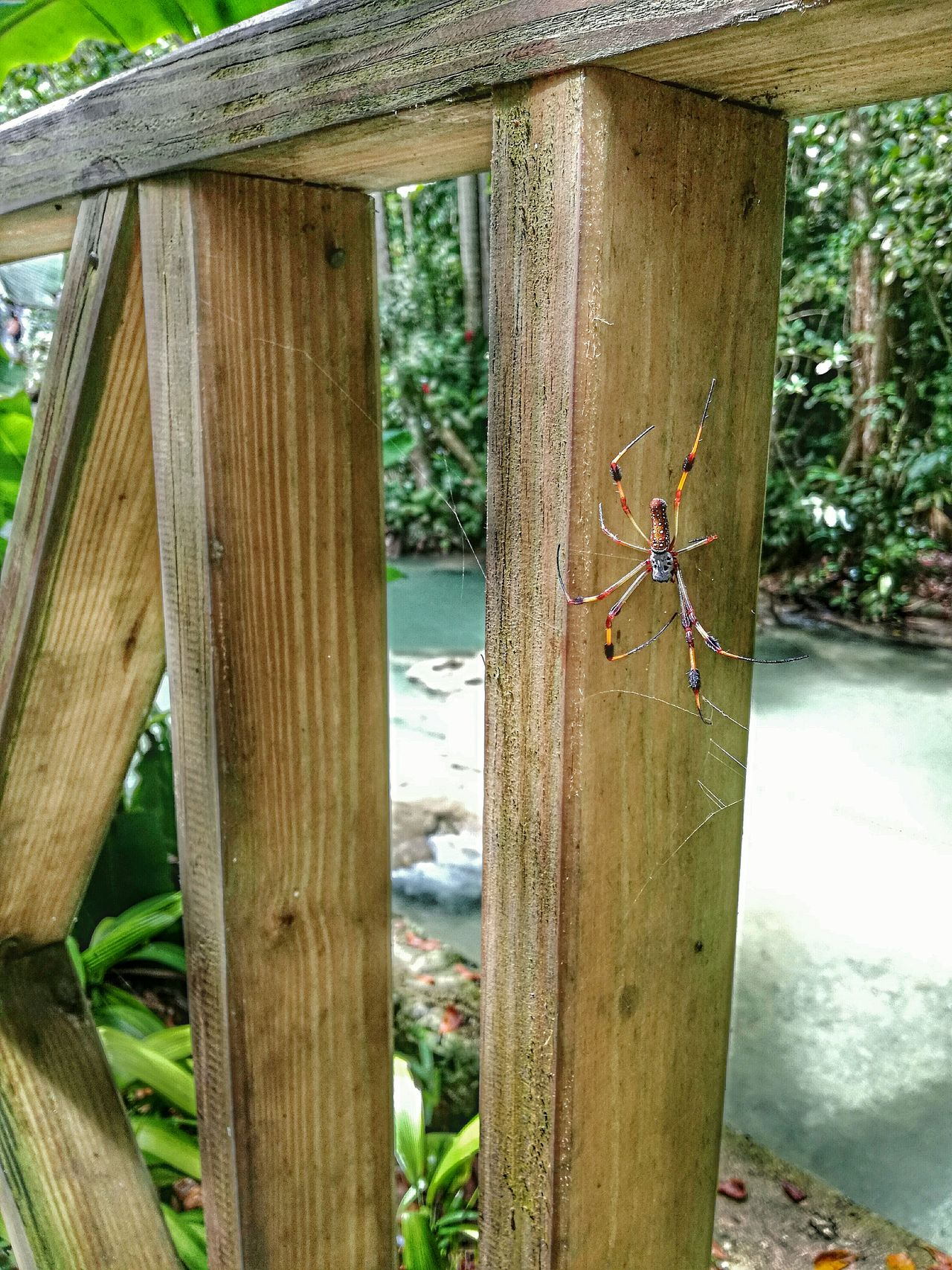 My Year My View Wood - Material Day Outdoors No People Water Nature Beauty In Nature Spider Wild