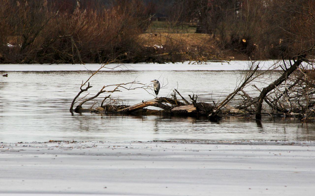 Bird Photography Cold Temperature Holz Silberreiher War Wasser Zugefroren