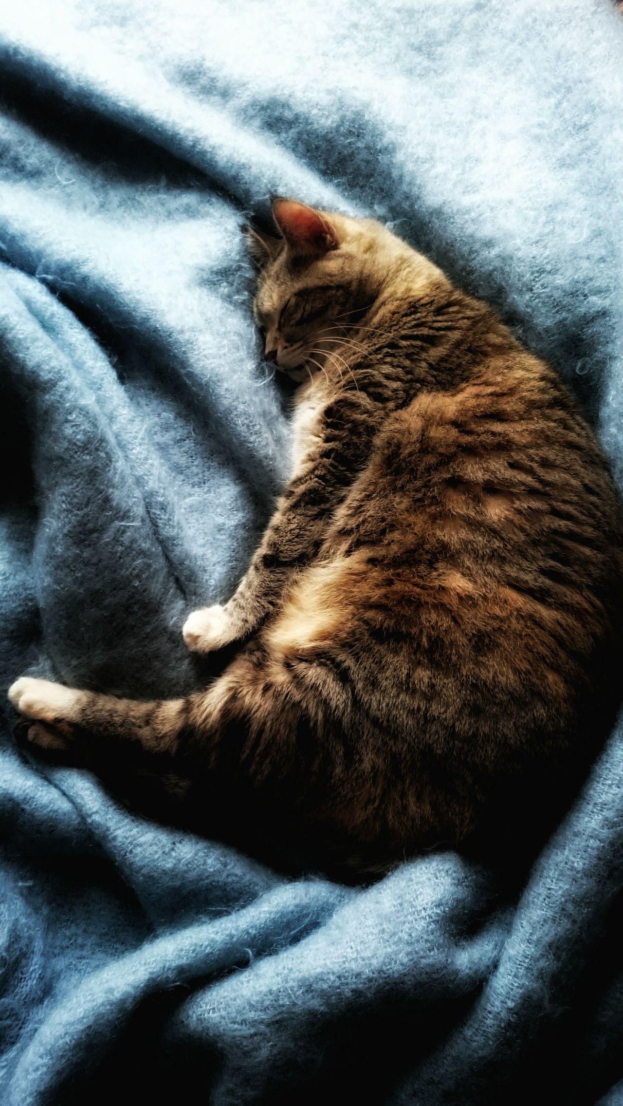 La Vie De Chat Au Pays Des Reves Ma Sacha bientôt 16 ans The Cat Dream Enjoying Life Detente ! Lovely Blue Wave My Year My View