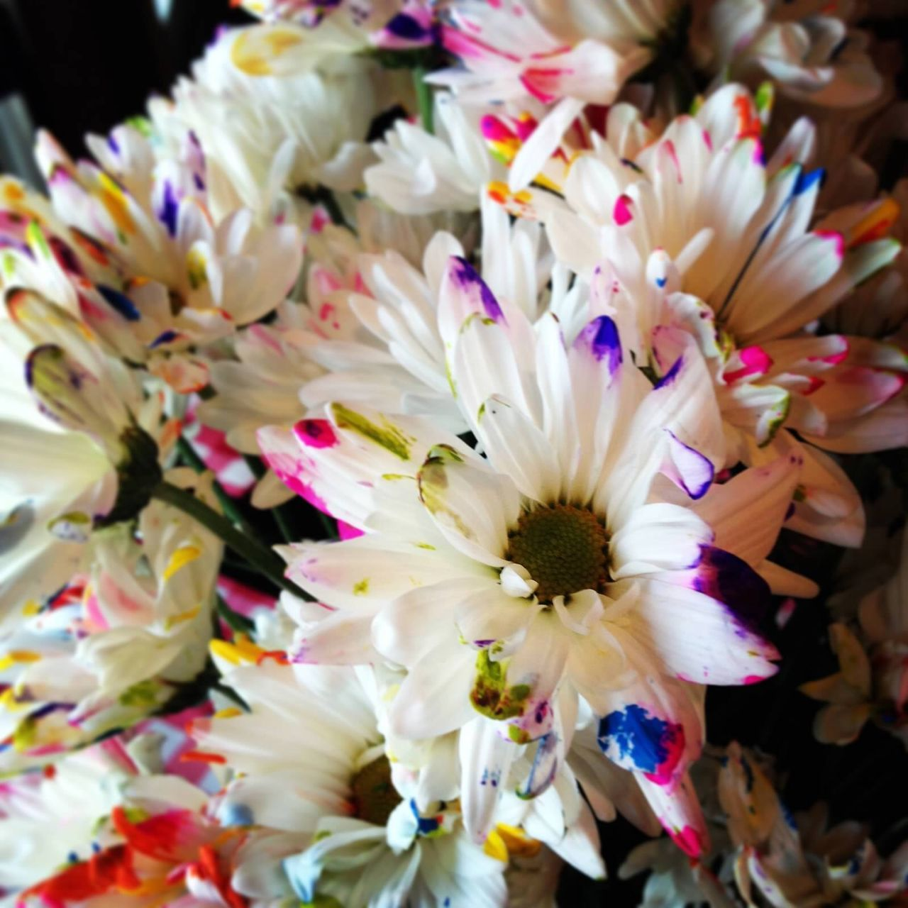 flower, petal, fragility, beauty in nature, nature, close-up, freshness, flower head, no people, day, outdoors