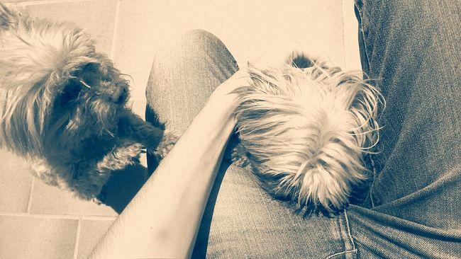 My two loves. Taking Photos Hello World Beautiful MyGabi Mynala Belleza Dogs Love