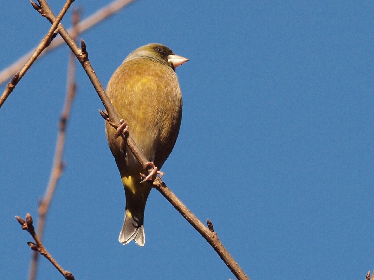 Birds EyeEm Birds Bird Bird Of Tokyo Pmg_tok