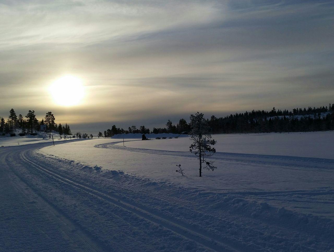 Ski Tracks In Field